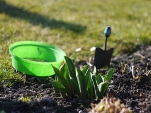 gardening-1440096-m