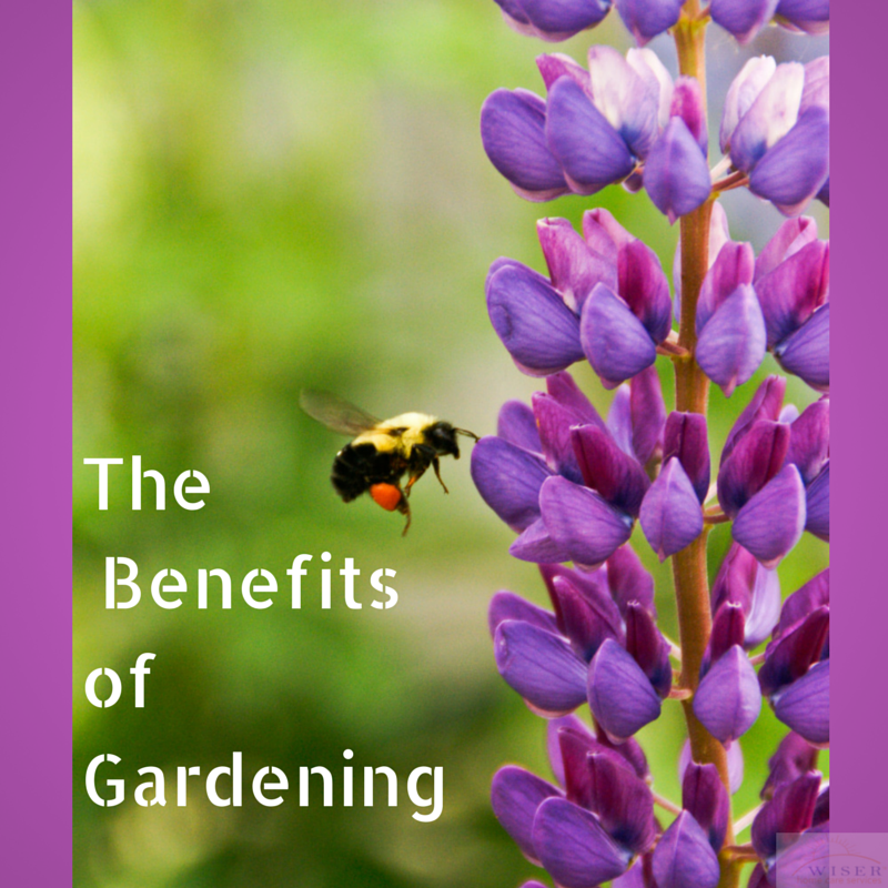 Gardening can be of great benefit to people of all ages! Learn about the benefits of gardening and how to tailor this activity for a senior you care for.