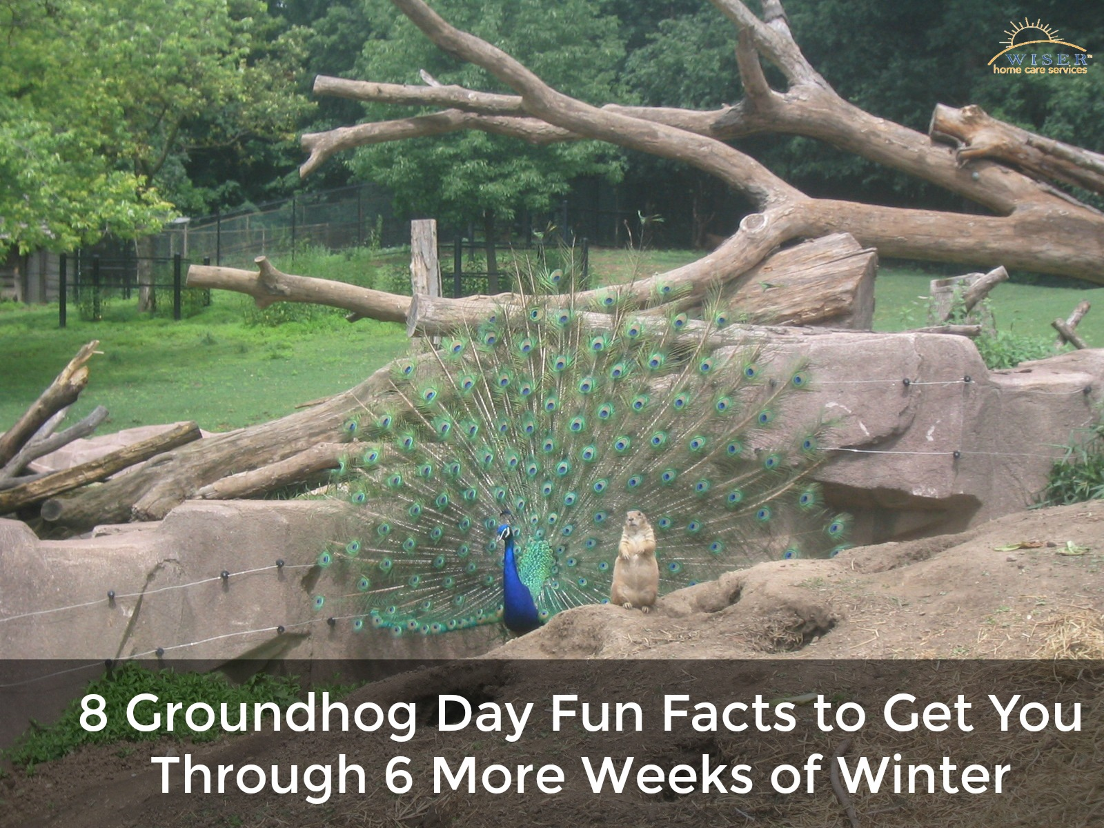 Punxsutawney Phil is one of the few animals worldwide that has an entire day nationally dedicated to him. In fact, Thursday was that day. AKA Groundhog Day.