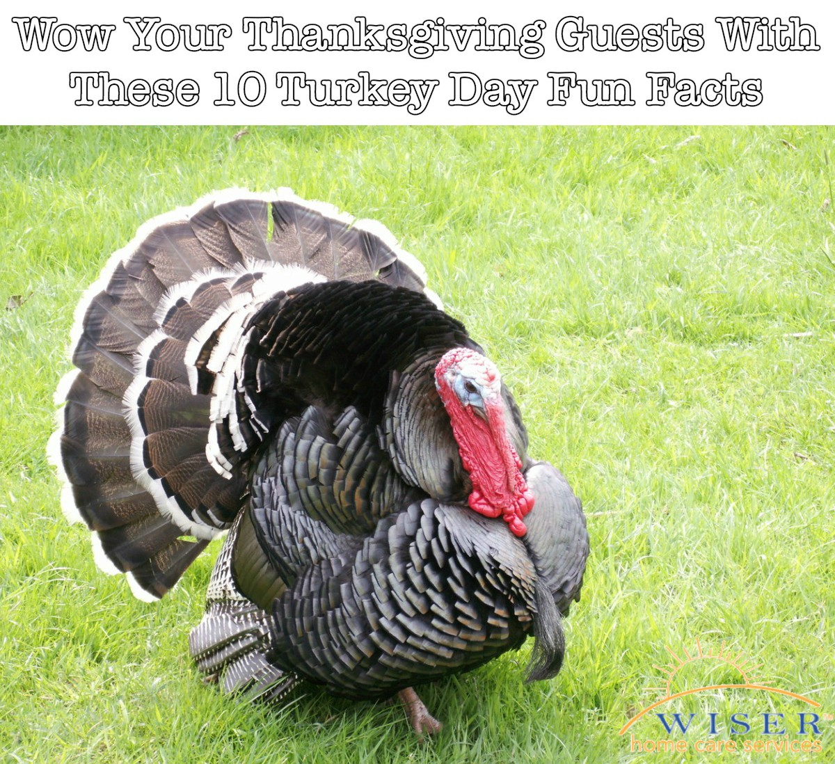 With Thanksgiving just around the corner we thought it would be fun to share some trivia so you can wow your dinner guests over your turkey dinner.